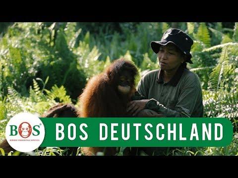 BOS stellt sich vor   BOS   orangutan.de