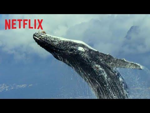 Unser Planet   Offizieller Trailer   Netflix