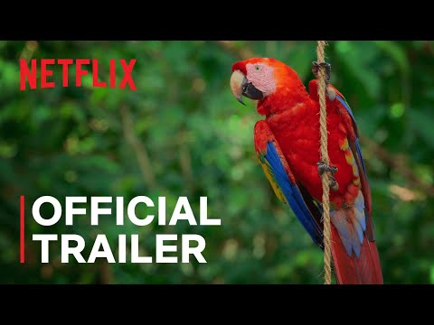 Life in Color with David Attenborough | Official Trailer | Netflix