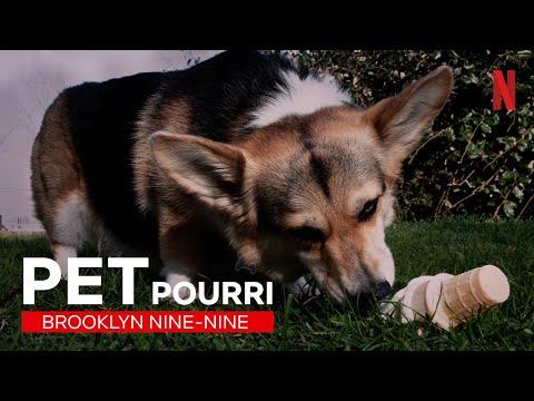 Einfach nur awwwh: Best-of Cheddar aus Brooklyn Nine-Nine   Netflix