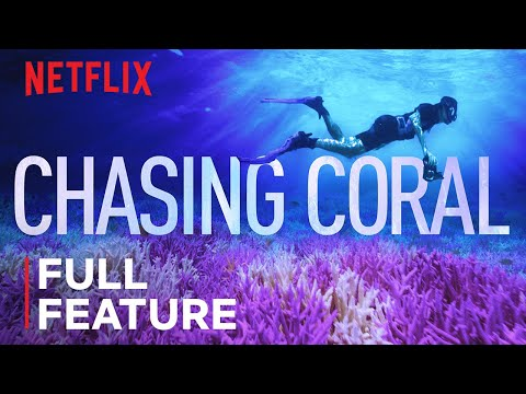 Chasing Coral   FULL FEATURE   Netflix