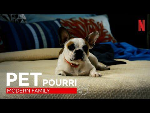 Einfach nur awwwh: Best of Bulldogge Stella aus Modern Family | Netflix
