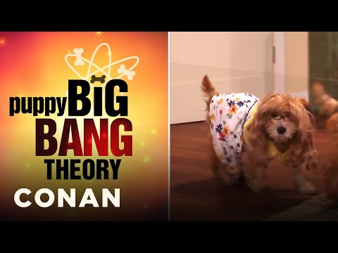 """Puppy """"Big Bang Theory"""" Is Here! 