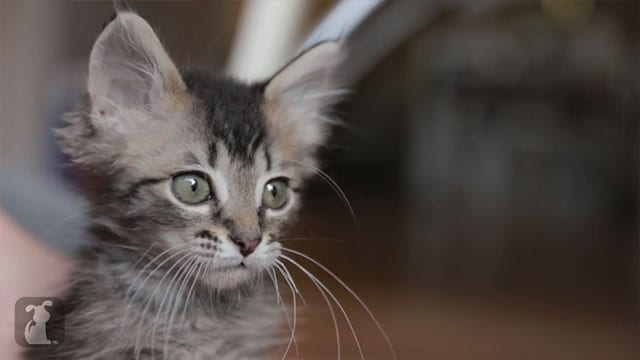 girlswithcats Girls mit Katzen anstatt Girls