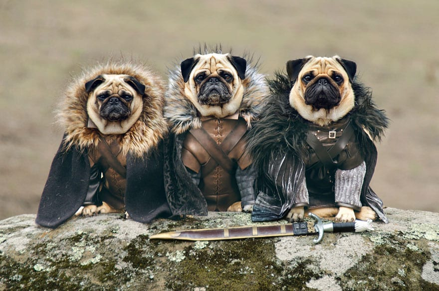 The Pugs of Westeros