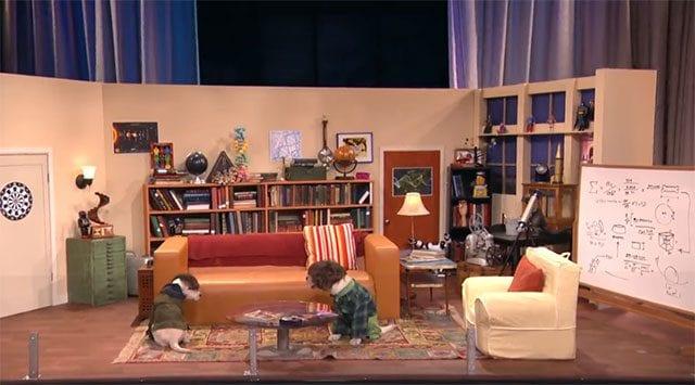 Hundewelpen-Big Bang Theory