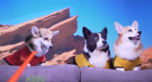 Wenn Hunde Star Trek spielen