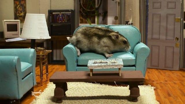 Hamsterfeld – Seinfeld mit Hamstern