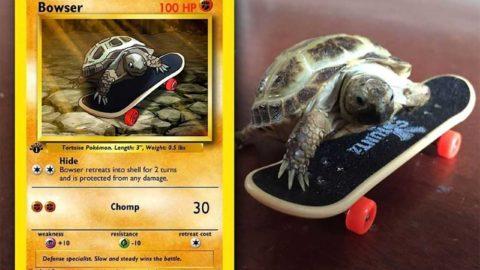 Stephanie Parcus erstellt Pokemon-Karten zu Haustieren
