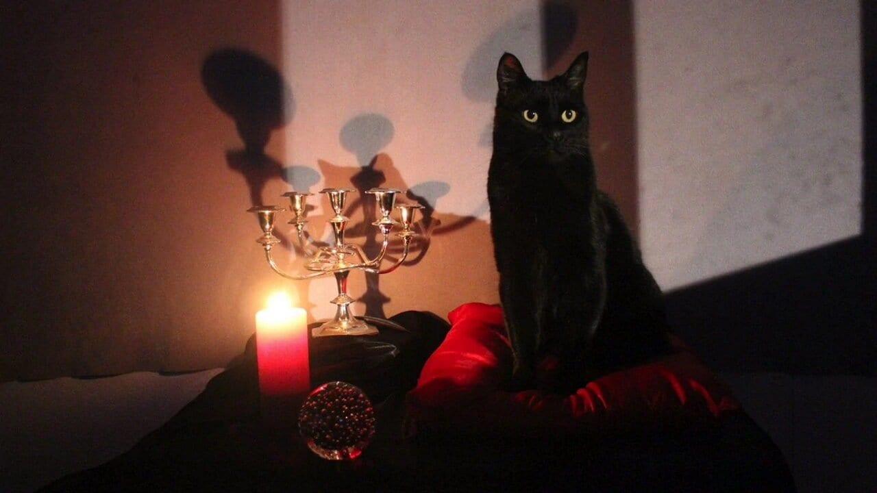 Chilling Adventures of Sabrina: Die besten Auftritte von Salem