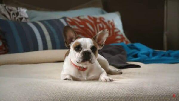 Modern Family: Best of Bulldogge Stella